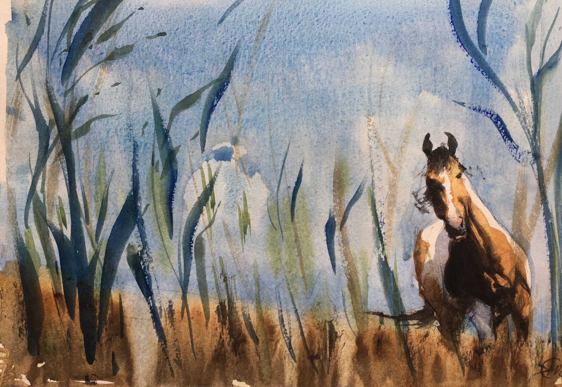 Horse in long grass